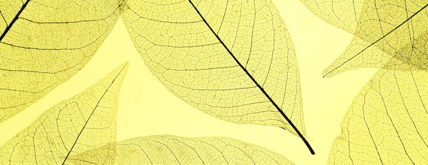 Vista superior de folhas translúcidas coloridas