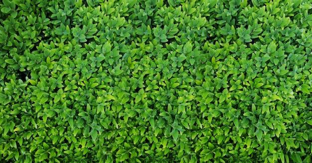 Vista superior de folhas verdes