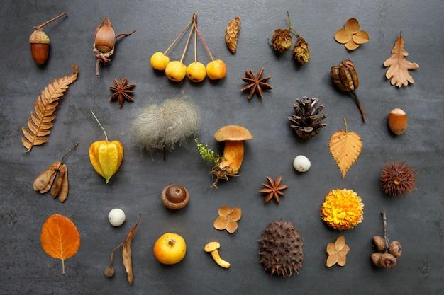 Vista superior de frutos silvestres, folhas e flores secas, physalis, castanha espinhosa, avelãs, bolota, cones, cogumelos, anis, samambaia em fundo azul marinho grunge. configuração plana