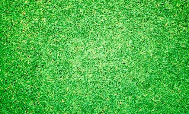 Vista superior de grama verde
