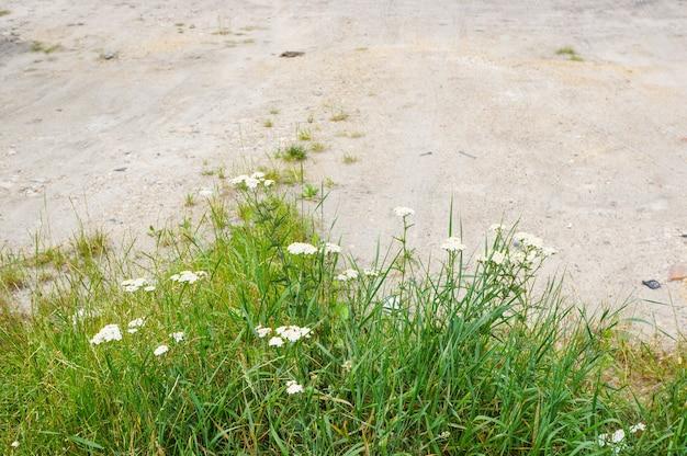 Vista superior de gramas com flores em um solo arenoso