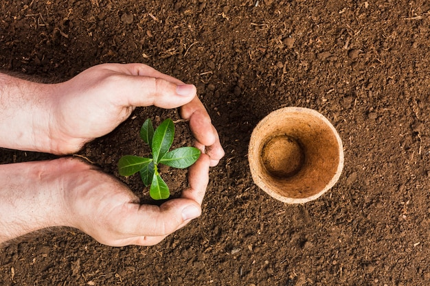 Vista superior, de, jardineiro, plantar