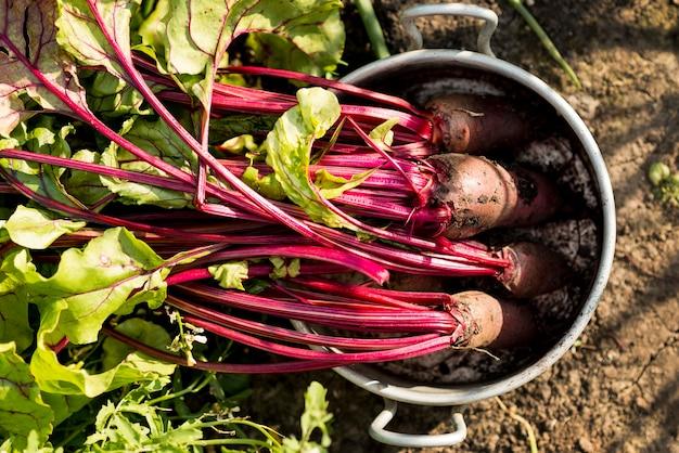 Vista superior de legumes em panela