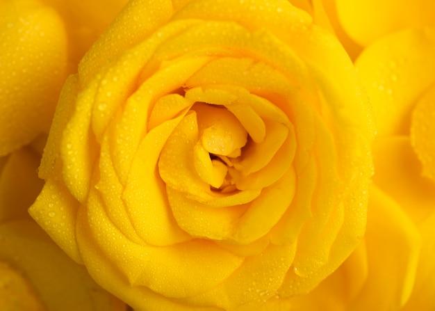 Vista superior de lindas flores amarelas