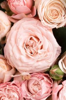 Vista superior de lindas flores cor de rosa