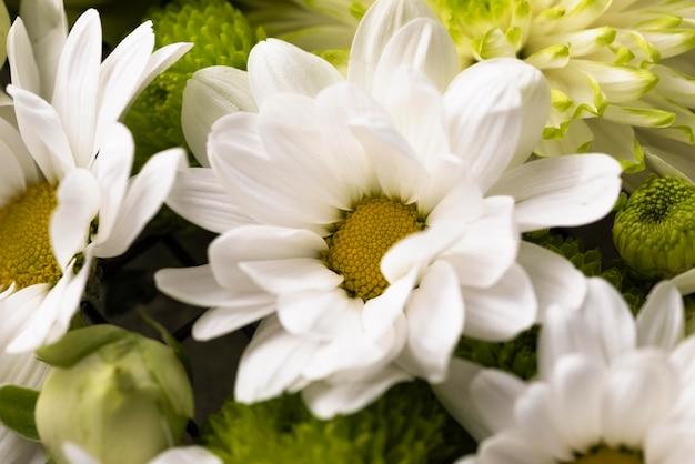 Vista superior de lindas flores em cores diferentes