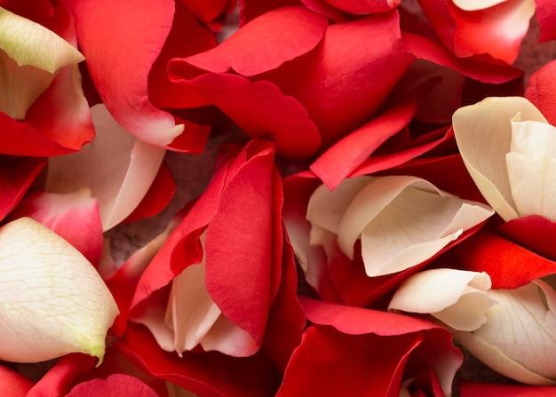 Vista superior de lindas flores vermelhas