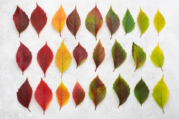 Vista superior de lindas folhas coloridas de outono