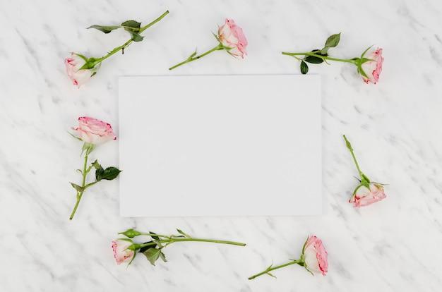 Vista superior de lindas rosas frescas
