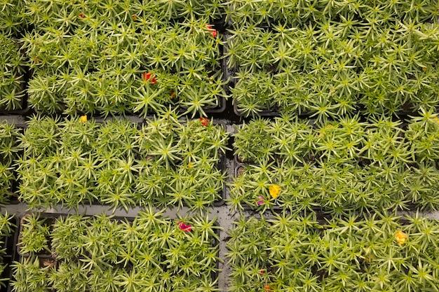 Vista superior de linhas de plantas