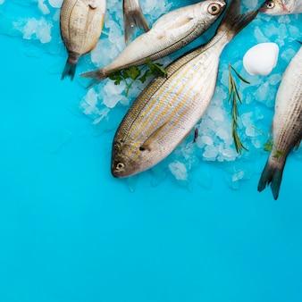 Vista superior de peixes frescos com brânquias no gelo