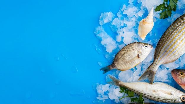 Vista superior de peixes frescos em cubos de gelo