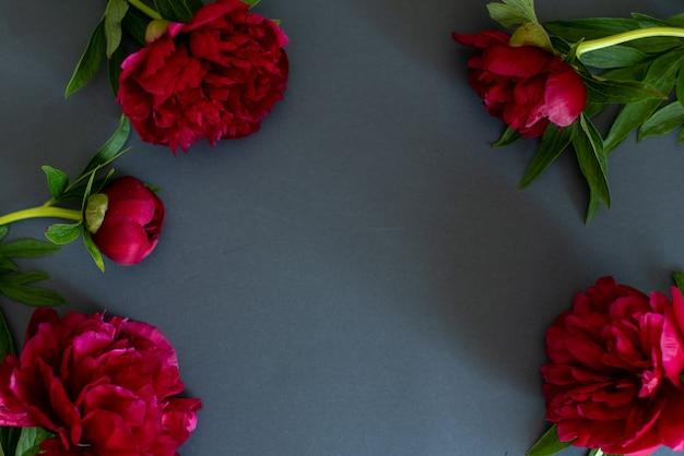 Vista superior de peônias flores sobre fundo escuro, com espaço de cópia no plano leigos