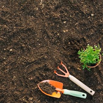 Vista superior, de, plantar, ligado, solo