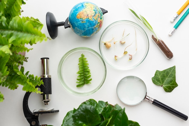 Vista superior de plantas e itens de laboratório