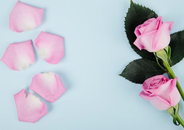 Vista superior de rosas cor de rosa com pétalas espalhadas sobre fundo azul, com espaço de cópia