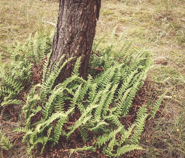 Vista superior de samambaias crescendo ao redor de um pinheiro