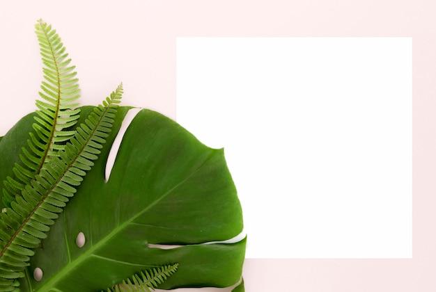 Vista superior de samambaias e folha de monstera com espaço de cópia