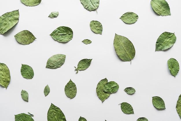 Vista superior, de, secos, folhas