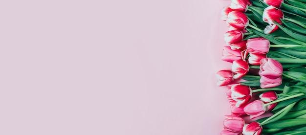 Vista superior de tulipas cor de rosa em fundo rosa com espaço livre