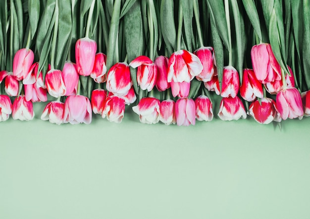 Vista superior de tulipas cor de rosa em fundo verde com espaço livre