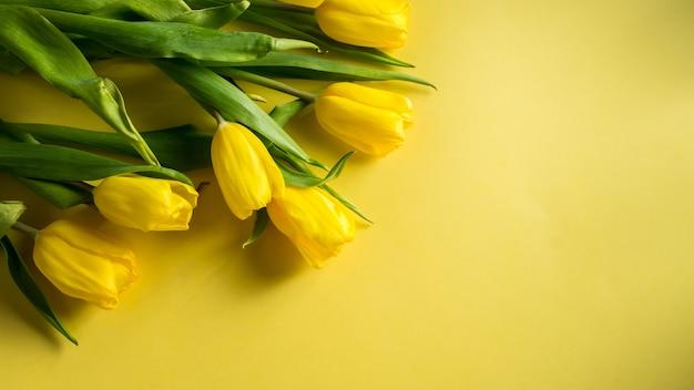 Vista superior de tulipas da primavera em foto panorâmica de fundo amarelo colorido
