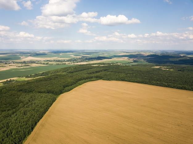 Vista superior de um campo de colza madura cercado por uma floresta verde