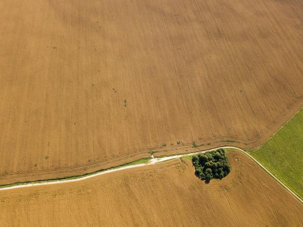Vista superior de um campo de colza madura
