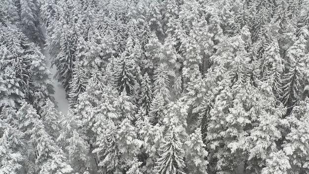 Vista superior de um drone de visão aérea de pássaros da floresta com neve