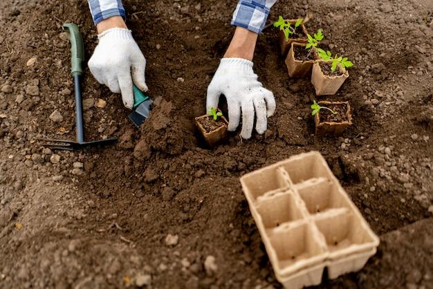 Vista superior, de, um, gardender, planta, pequeno, rebento, em, a, solo