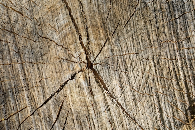 Vista superior, de, um, madeira, natural, stump