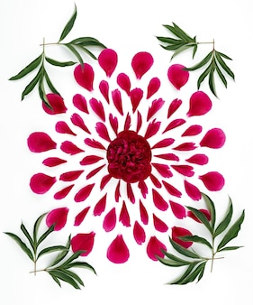 Vista superior de um padrão floral de pétalas de peônia. composição de flores em uma superfície branca feita à mão.