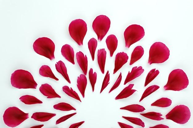 Vista superior de um padrão floral de pétalas de peônia.