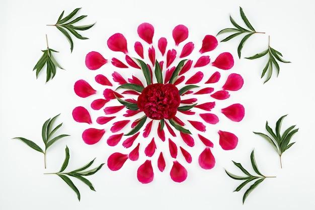 Vista superior de um padrão floral de pétalas de peônia