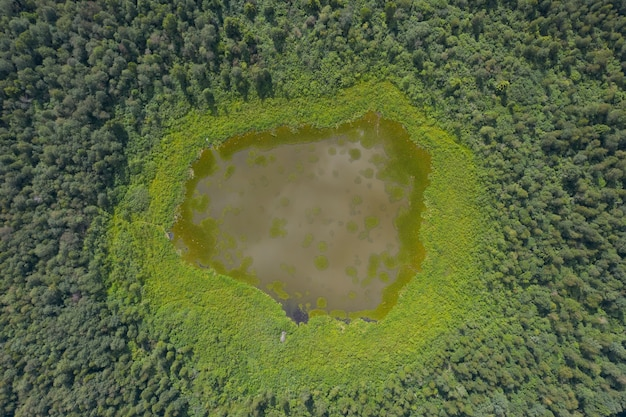 Vista superior de um pequeno lago cercado por floresta