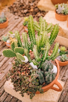Vista superior de um pote com variedade de plantas suculentas