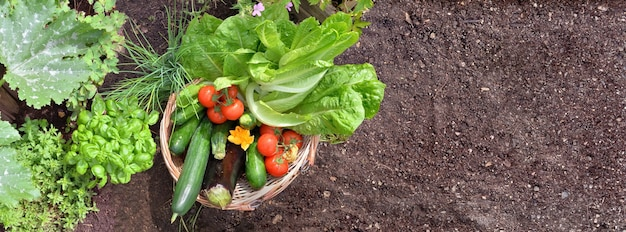 Vista superior de uma cesta cheia de vegetais frescos coloridos no jardim com espaço vazio de sujeira
