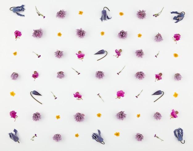 Vista superior de uma composição de flores em um fundo branco