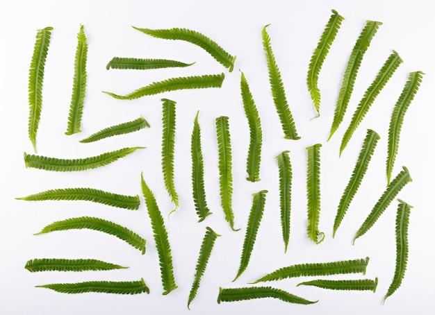 Vista superior de uma composição de folhas de samambaia em uma superfície branca