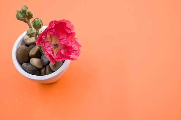 Vista superior de uma flor de cravo rosa em um pequeno vaso, colocado em uma superfície laranja