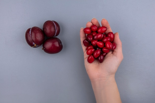 Vista superior de uma mão feminina segurando cornel berries com pluots em fundo cinza