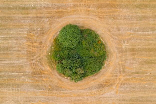 Vista superior de uma pequena floresta no centro do campo onde os grãos crescem