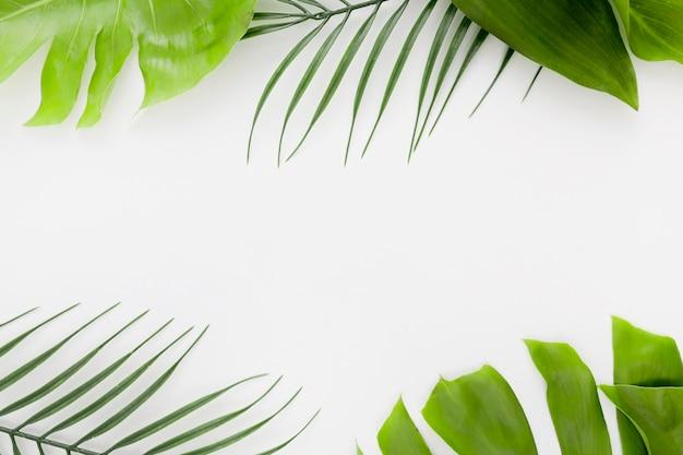 Vista superior de uma planta fina com folhas de monstera e espaço de cópia