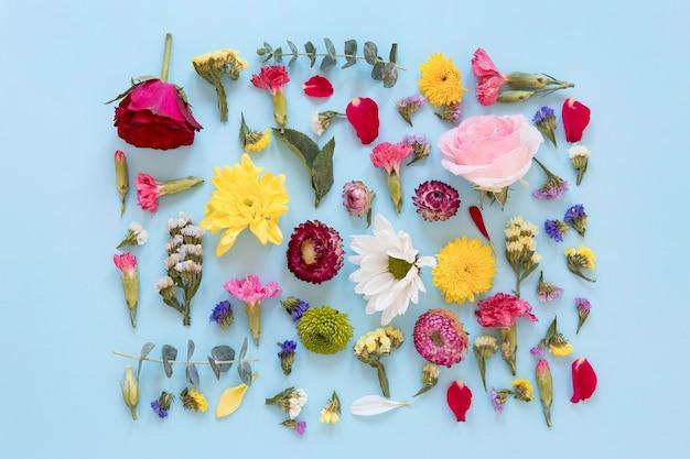 Vista superior de uma variedade de flores lindas Foto gratuita
