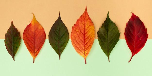 Vista superior de uma variedade de folhas coloridas de outono