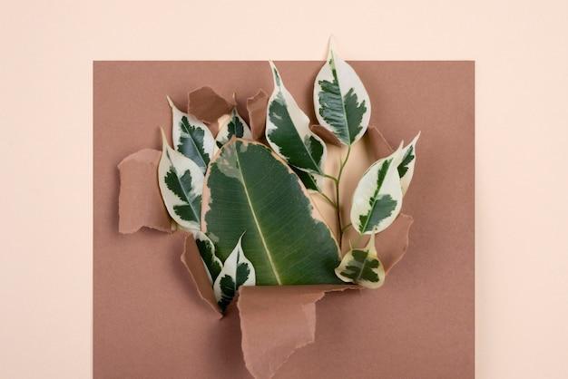 Vista superior de uma variedade de folhas de plantas com papel rasgado