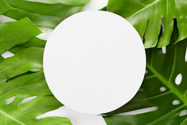 Vista superior de várias folhas de monstera com espaço de cópia