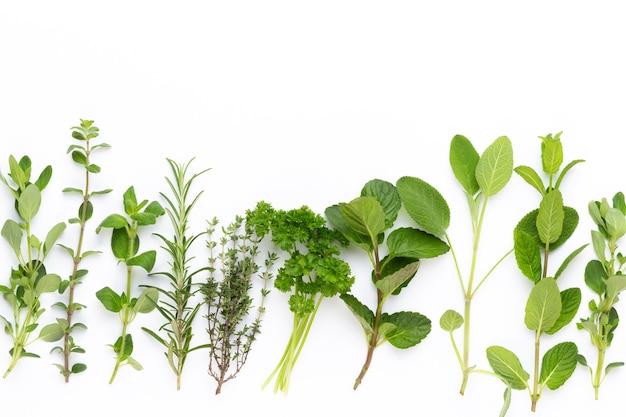 Vista superior de várias plantas de especiarias