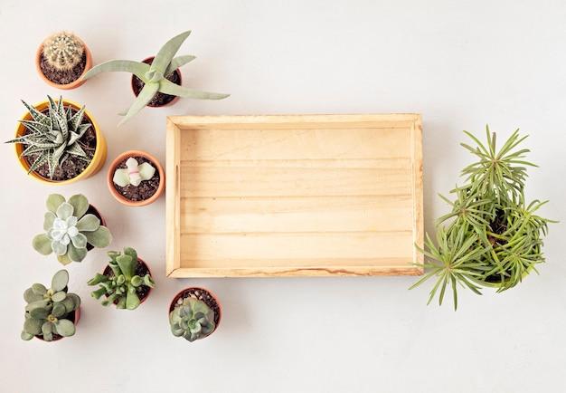 Vista superior de vasos de plantas em casa. jardinagem doméstica, conceito de decoração de interiores. copie o espaço
