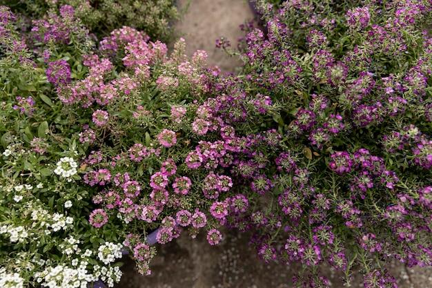 Vista superior decoração com flores coloridas